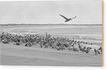Pelican Convention  Wood Print by Betsy Knapp