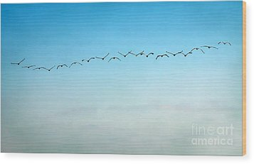 Pelican Flight Line Wood Print by Peggy Hughes