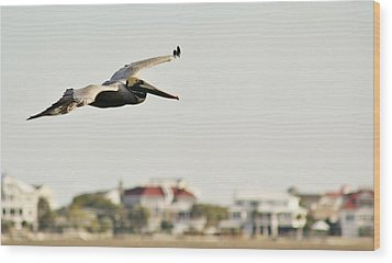 Pelican Flying Over Murrells Inlet Wood Print by Paulette Thomas