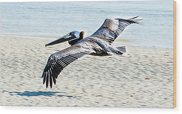 Pelican Flying Wood Print