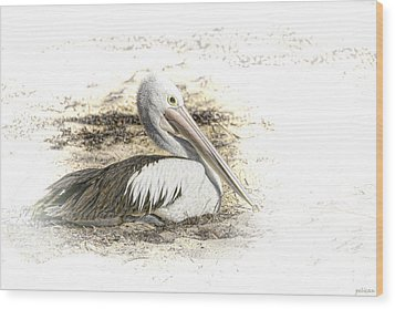 Wood Print featuring the photograph Pelican by Holly Kempe