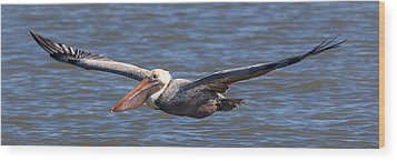 Pelican In Flight Wood Print by Patricia Schaefer