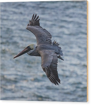 Wood Print featuring the photograph Pelican In Flight by Sonny Marcyan