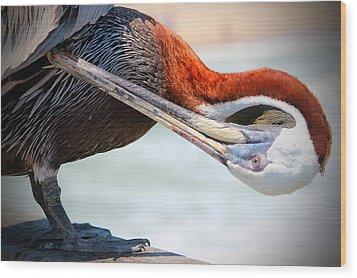 Pelican Itch Wood Print by Cynthia Guinn