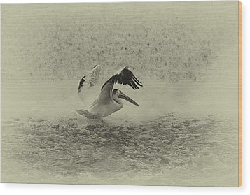 Pelican Landing In Black And White Wood Print by Thomas Young