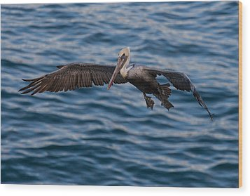 Wood Print featuring the photograph Pelican Landing by Sonny Marcyan