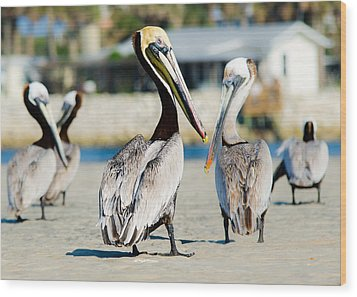 Pelican Looking At You Wood Print