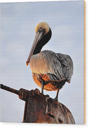 Pelican Looking Back Wood Print by AJ  Schibig