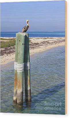 Pelican Lookout Wood Print by Alison Tomich