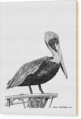 Pelican Of Monterey Wood Print by Jack Pumphrey