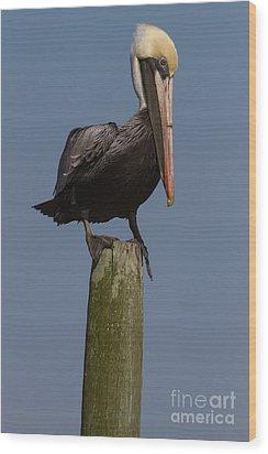 Pelican On Post IIi Wood Print