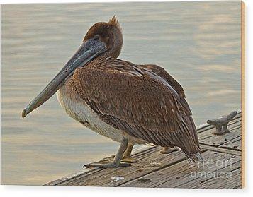 Pelican On The Dock Wood Print