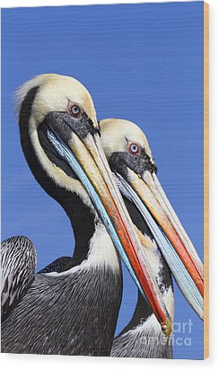 Pelican Perfection Wood Print by James Brunker
