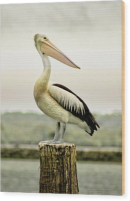 Pelican Poise Wood Print by Holly Kempe