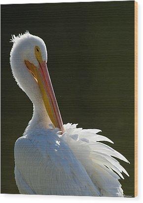 Pelican Preening Wood Print