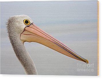 Pelican Profile Wood Print by Mike  Dawson