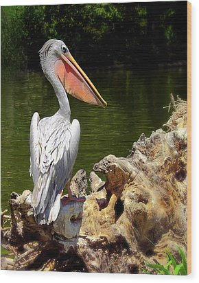 Pelican Proud #2 Wood Print