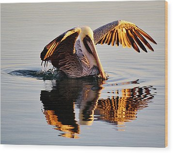 Pelican Reflection Wood Print by Paulette Thomas