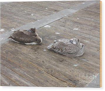 Wood Print featuring the photograph Pelican Resting by Deborah DeLaBarre