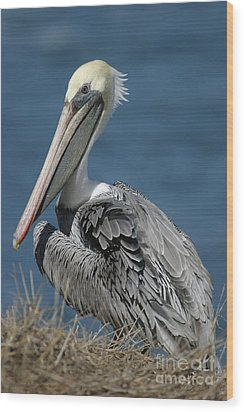 Pelican Wood Print by Russell Christie