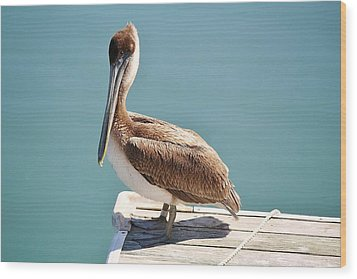 Pelican - Sitting On The Dock Of The Bay Wood Print by Paulette Thomas
