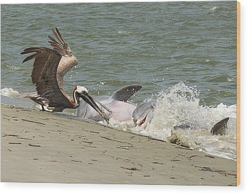 Pelican Steals The Fish Wood Print by Patricia Schaefer