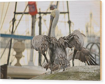 Pelican Strut Wood Print by Donna Greene