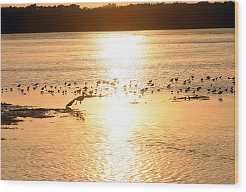 Pelican Sunset Wood Print by Mark Russell
