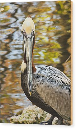Wood Print featuring the photograph Pelican by Tammy Schneider