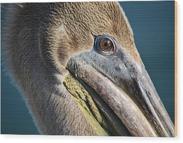 Pelican Up Close Wood Print by Paulette Thomas