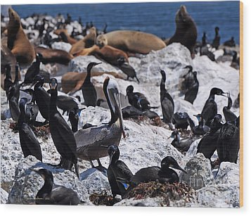 Wood Print featuring the photograph Pelican Visitor by Susan Wiedmann