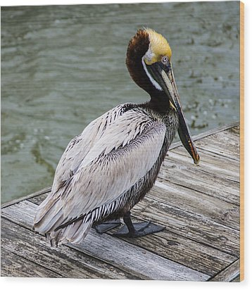 Pelican Watch Wood Print by Gregg Southard