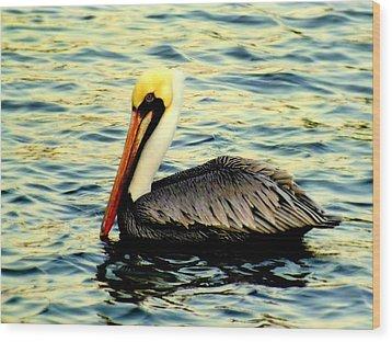 Pelican Waters Wood Print by Karen Wiles