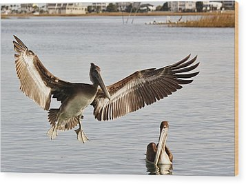 Pelican Wings Span Wood Print by Paulette Thomas