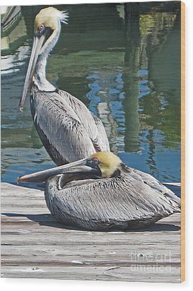 Pelicans At Rest Wood Print