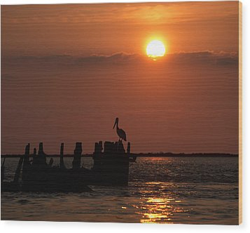 Pelicans In Silhouette In Texas Wood Print by Ray Devlin