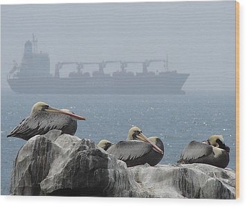 Pelicans In The Mist Wood Print by Ramona Johnston