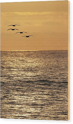 Pelicans Ocean And Sunsetting Wood Print by Tom Janca