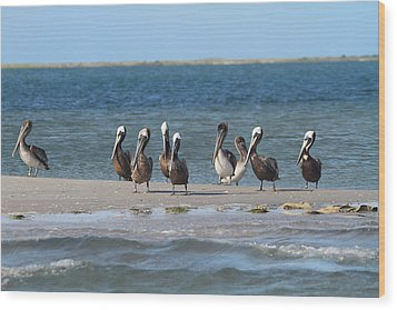 Pelicans Of Bird Island 7 Wood Print by Cathy Lindsey