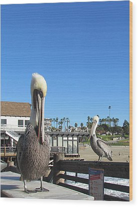 Pelicans On Pier Wood Print by Bonnie Muir