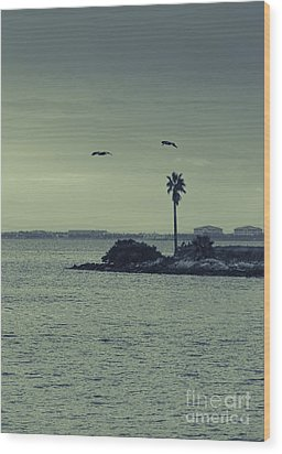 Pelicants And Palm Wood Print by Marvin Spates