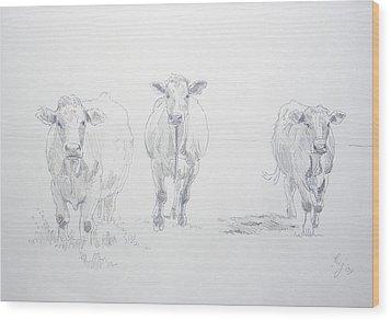 Pencil Drawing Of Three Cows Wood Print