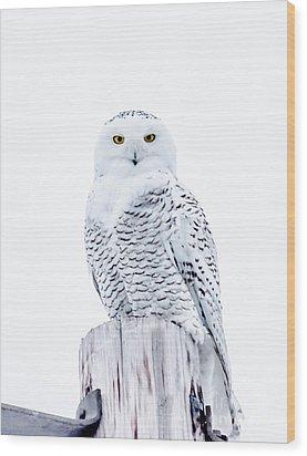Penetrating Stare Wood Print