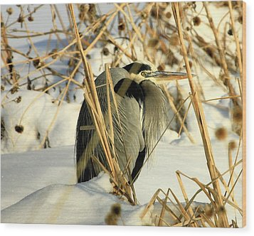 Penguin Heron  Wood Print