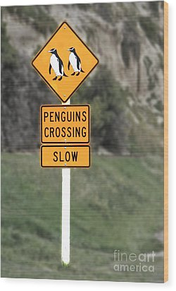 Penguins Crossing Oamaru Wood Print by Nareeta Martin