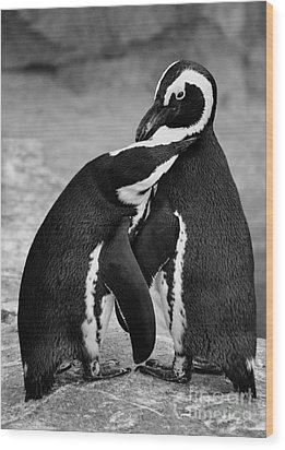 Penguin's Preening Black And White Wood Print