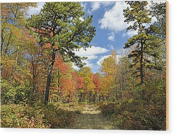 Pennsylvania Forest In Autumn Pocono Mountains Wood Print