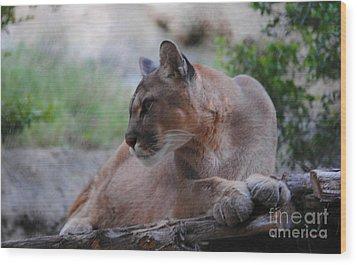 Pensive Puma Wood Print by DiDi Higginbotham
