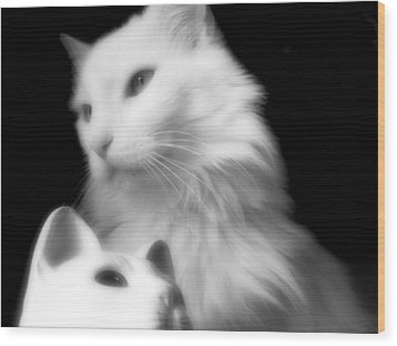 Wood Print featuring the photograph Pensive Turkish Angora by Aurelio Zucco