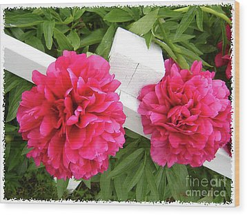 Wood Print featuring the photograph Peonies Resting On White Fence by Barbara Griffin